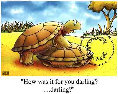 turtle-sex-cartoon-funny