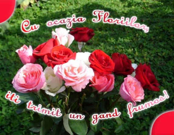 florii-urare-de-florii