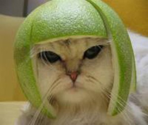 Cat with an apple hat