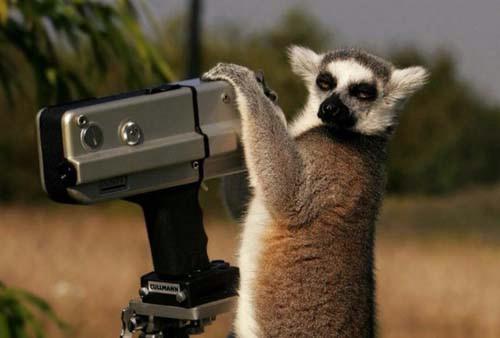 animalphotographers02